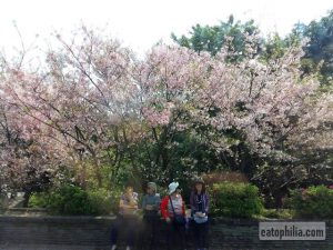 Yangmingshan Day Trip